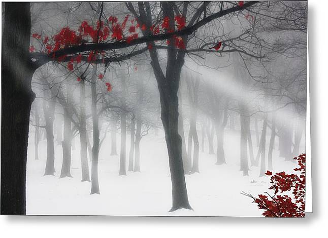 Red Leaves Greeting Cards - Alone In The Forest Greeting Card by Tom York Images