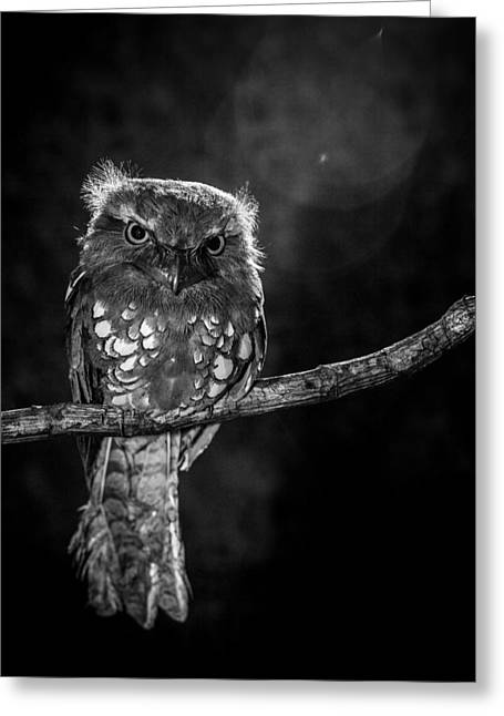 Alone In The Night Greeting Card by Wilianto