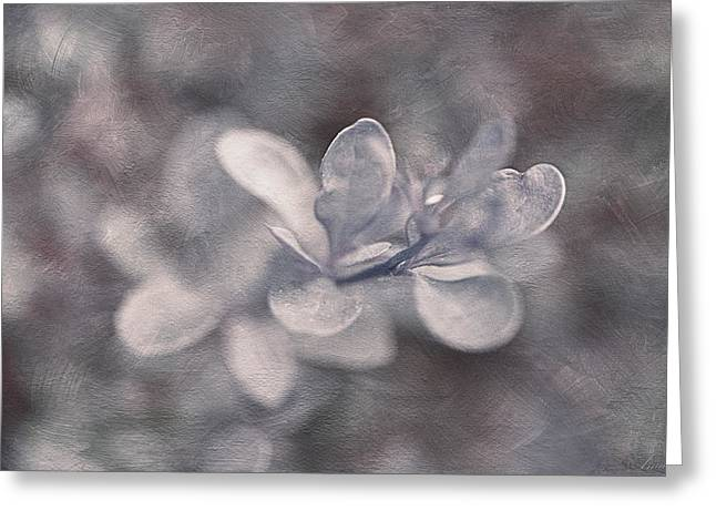 Close Focus Floral Greeting Cards - Alone In The Velvet Darkness Greeting Card by Maria Angelica Maira