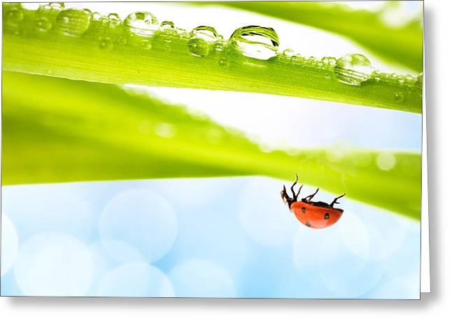 Alone Ladybug Greeting Card by Boon Mee