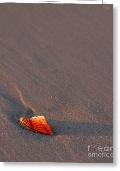 Seashell Greeting Cards - Alone Greeting Card by Liz Masoner