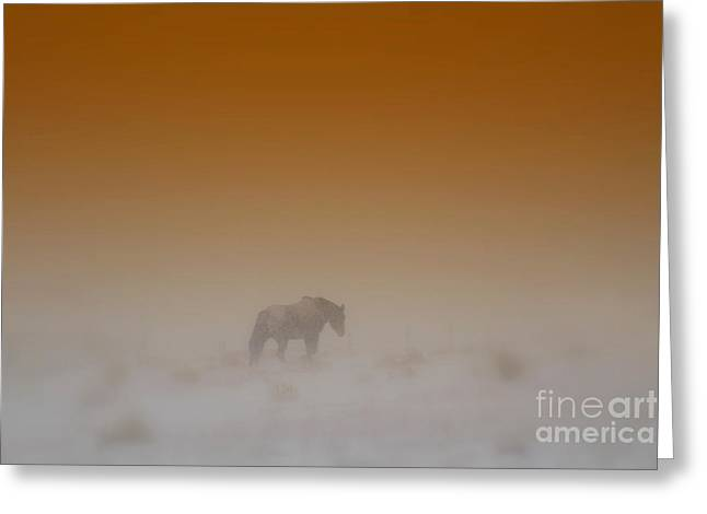 Quarter Horses Greeting Cards - Alone Greeting Card by Nikole Morgan
