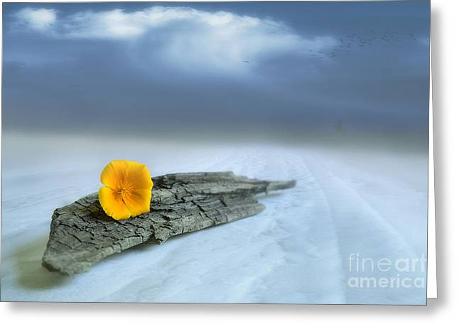 Organic Digital Art Greeting Cards - Alone on the beach Greeting Card by Veikko Suikkanen