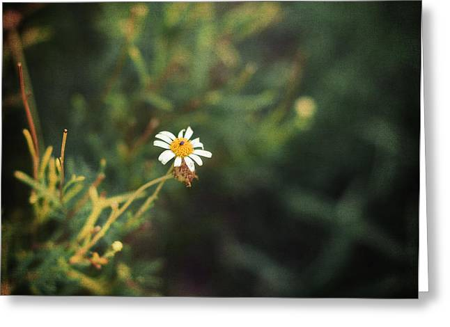 Garden Of Daisies Greeting Cards - Alone Greeting Card by Taylan Soyturk