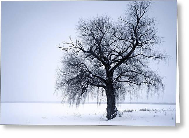 Snow Tree Prints Greeting Cards - Alone Tree Greeting Card by Romeo Koitmae
