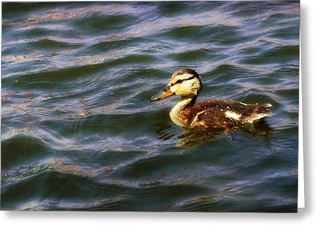 Ducklings Greeting Cards - Aloneness Greeting Card by Fraida Gutovich