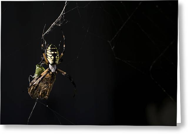 Eating Entomology Greeting Cards - Along Came a Spider Greeting Card by Heather Applegate