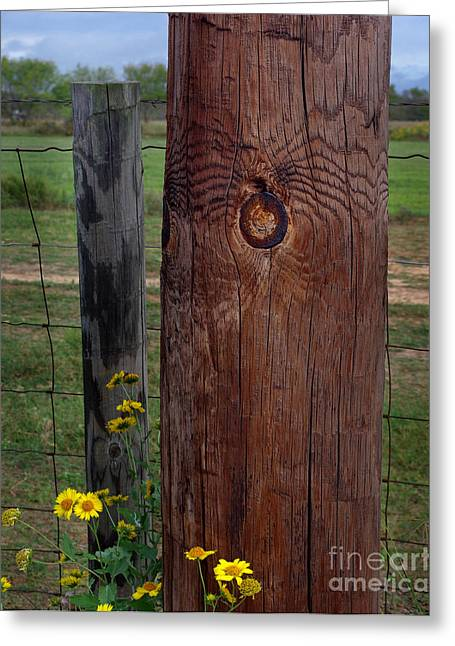 Fence Pole Greeting Cards - Along Came a Spider Greeting Card by Peter Piatt