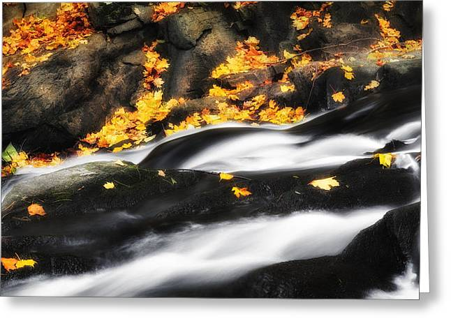 Cascade Greeting Cards - Along the Autumn Stream Greeting Card by Bill  Wakeley
