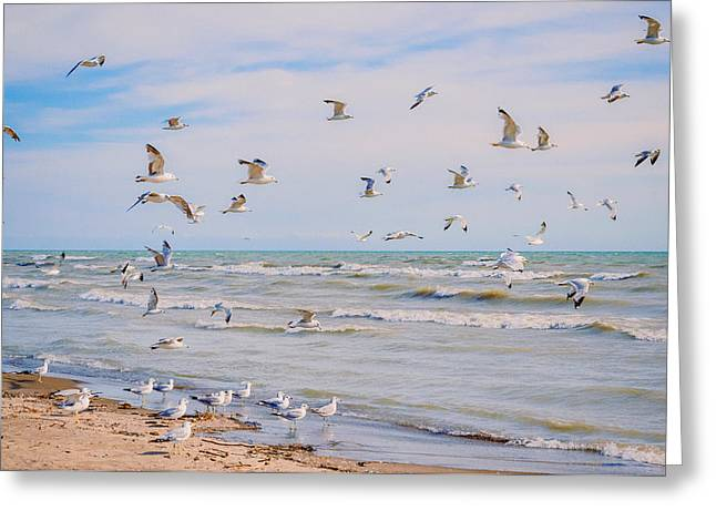 Recently Sold -  - Flying Seagull Greeting Cards - Along The Beach Greeting Card by Garvin Hunter