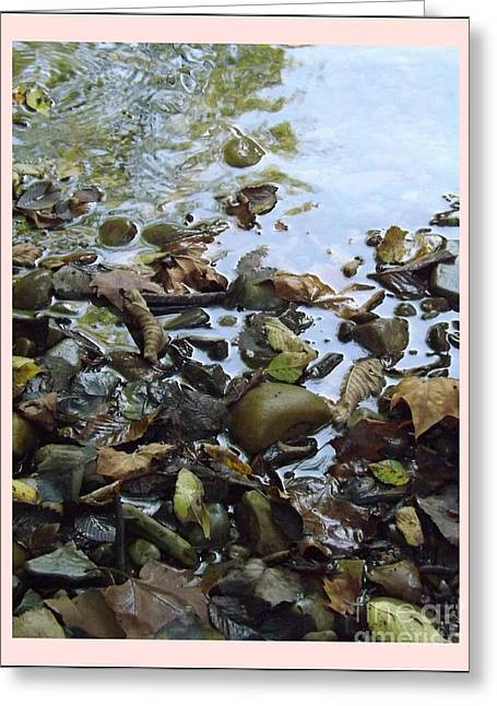 Recently Sold -  - Nature Greeting Cards - Along the Creek Greeting Card by Sara  Raber