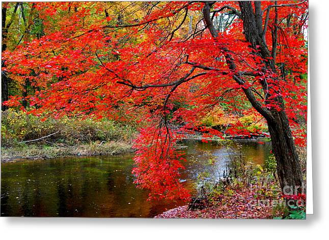 Fall Trees With Stream. Greeting Cards - Along The Lamprey Greeting Card by Eunice Miller