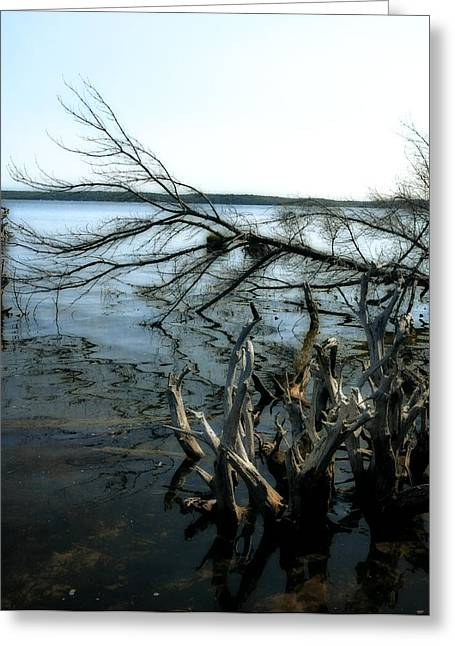 Tree Roots Digital Art Greeting Cards - Along the Lost Lake Trail Greeting Card by Michelle Calkins