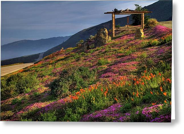 Phlox Greeting Cards - Along the Pacific Highway Greeting Card by Donna Kennedy