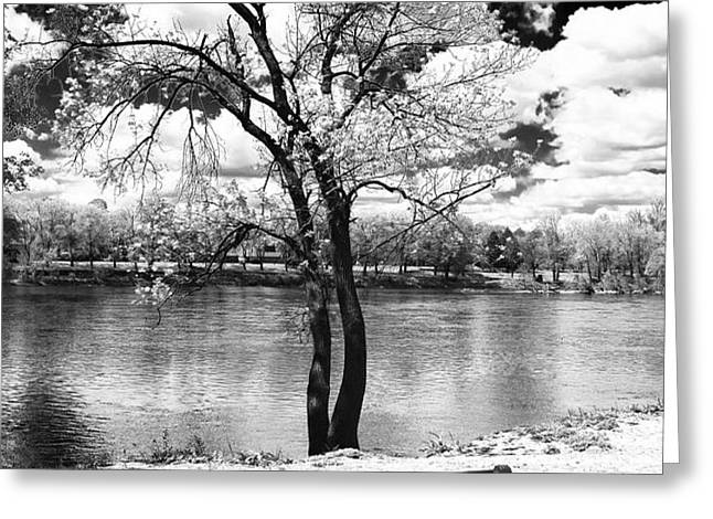 Along the River Greeting Card by John Rizzuto