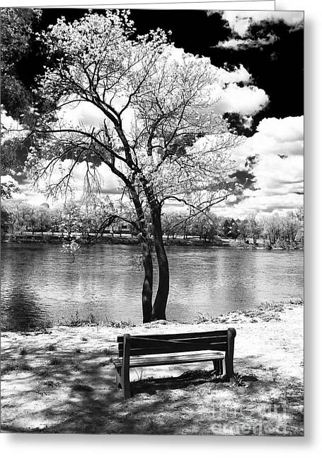 Black And White Nature Landscapes Greeting Cards - Along the River Greeting Card by John Rizzuto
