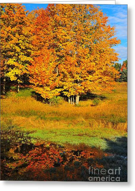 Image Greeting Cards - Along the Riverbank Greeting Card by Terri Gostola