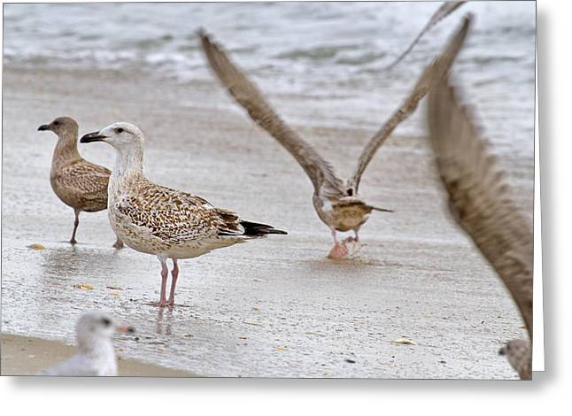 Flying Seagull Greeting Cards - Along the Shoreline Greeting Card by Betsy C  Knapp