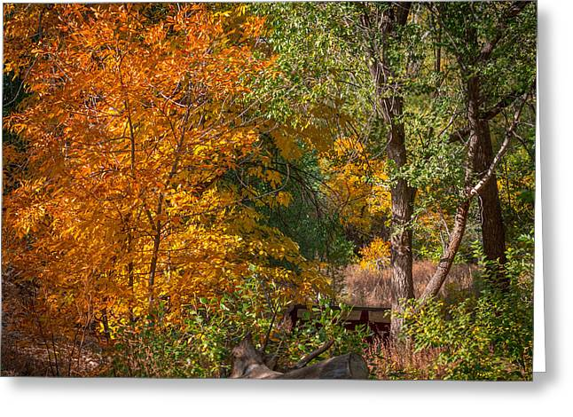 Colorful Trees Greeting Cards - Along the Trail Greeting Card by Ernie Echols