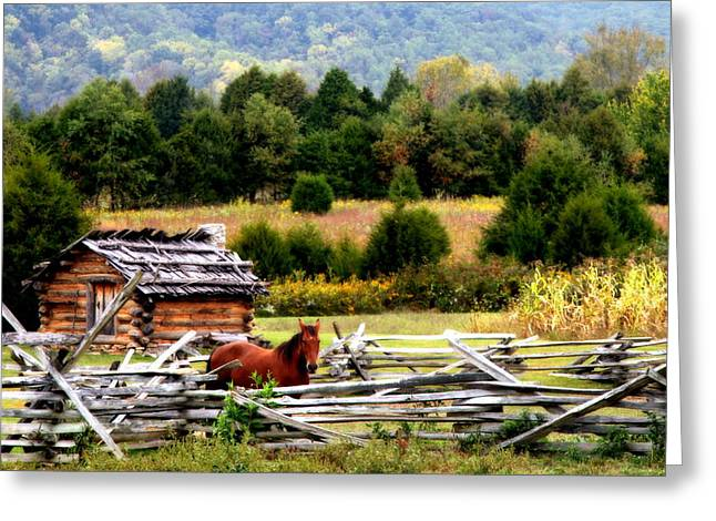 Kentucky Horse Park Photographs Greeting Cards - ALONG the WILDERNESS TRAIL Greeting Card by Karen Wiles