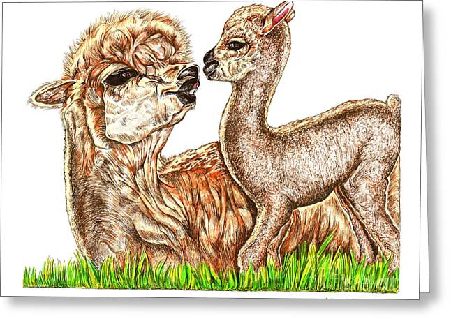 Wild Life Drawings Greeting Cards - Alpaca and Baby 2 Greeting Card by Karen Sirard