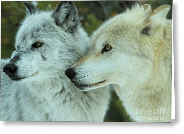 Alpha Wolf Greeting Cards - Alpha Girl And Beta Greeting Card by Adam Jewell