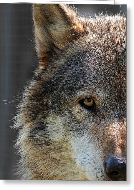 Pack Animal Greeting Cards - Alpha Male Wolf - Dont Mess With Me Greeting Card by Gill Billington