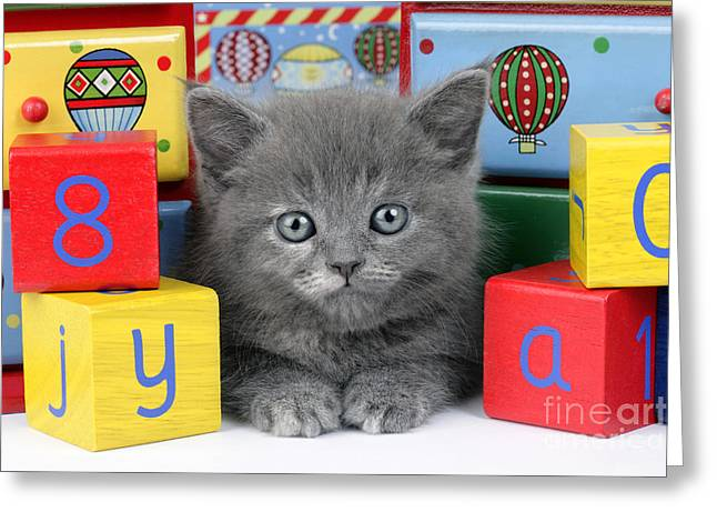 Playful Kitten Greeting Cards - Alphabet Cat CK415 Greeting Card by Greg Cuddiford