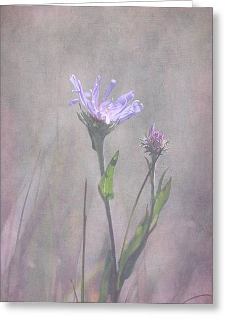 Textured Floral Greeting Cards - Alpine Aster Greeting Card by Angie Vogel