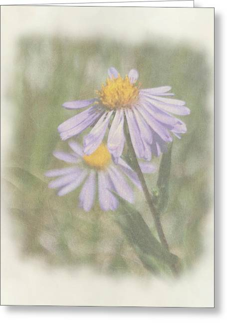 Texture Floral Greeting Cards - Alpine Asters Greeting Card by Angie Vogel