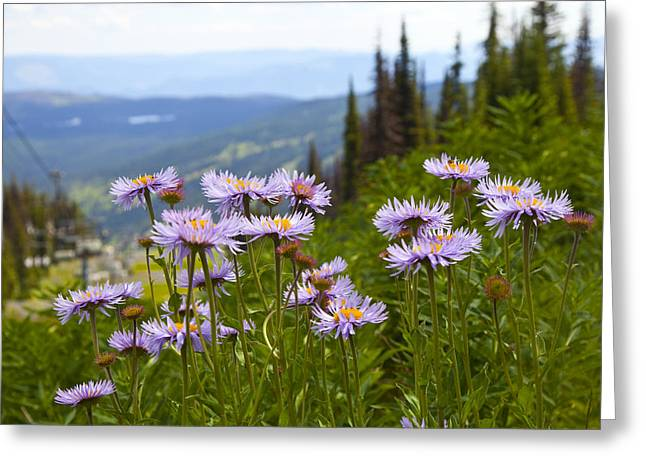 Chairlift Greeting Cards - Alpine Asters Greeting Card by Theresa Tahara