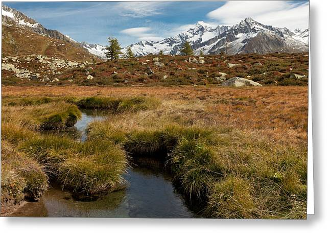 Biotope Greeting Cards - Alpine biotope Greeting Card by Lorenzo Tonello
