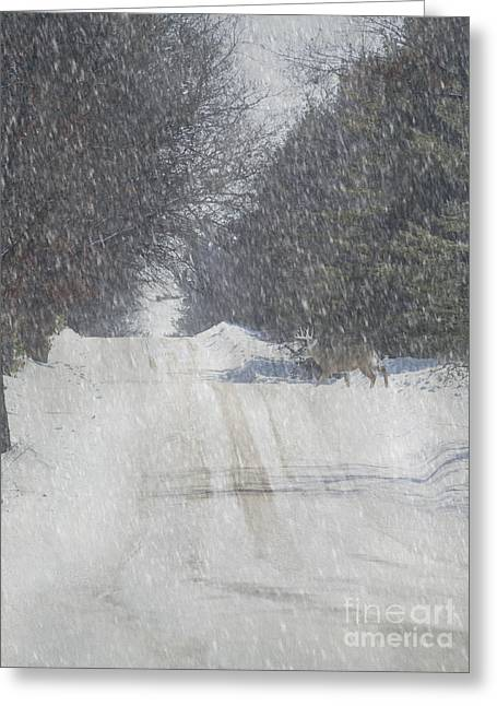 Snowy Roads Mixed Media Greeting Cards - Alpine Buck Greeting Card by Keith Bell