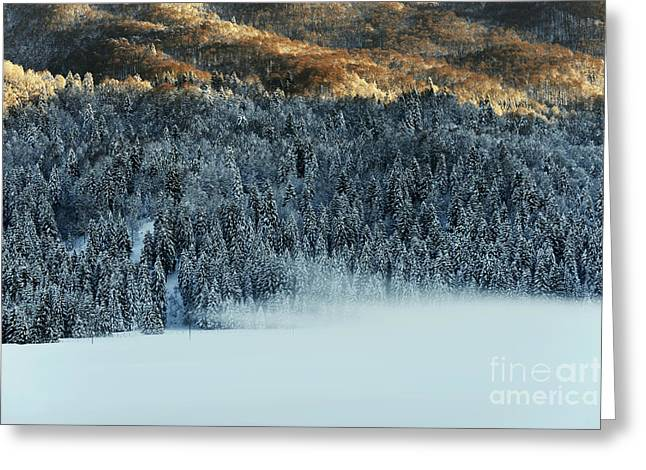 Snow Scene Landscape Greeting Cards - Alpine forest Greeting Card by Yuri Santin