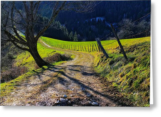 Gravel Road Greeting Cards - Alpine Lane Greeting Card by Mountain Dreams