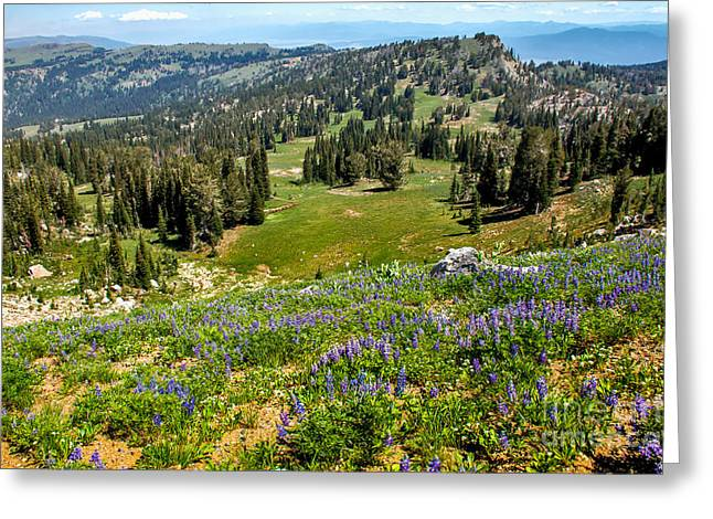 Haybale Greeting Cards - Alpine Meadow Greeting Card by Robert Bales