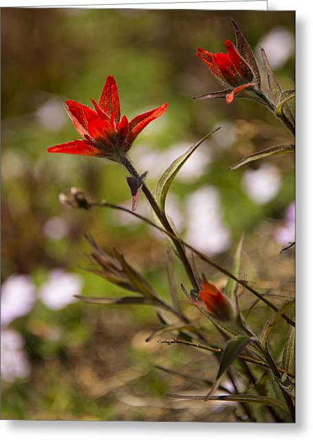 Mountain Flowers Greeting Cards - Alpine Red Greeting Card by Aaron S Bedell