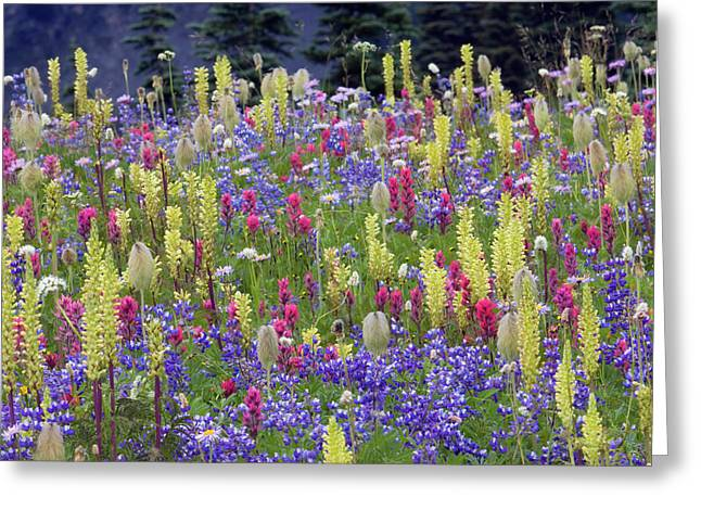 Alpine Wildflowers, Mount Rainier Greeting Card by Ken Archer