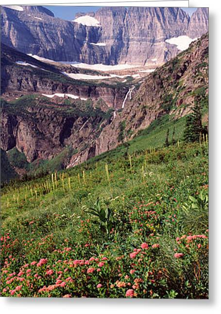 Wildflower Photography Greeting Cards - Alpine Wildflowers On A Landscape, Us Greeting Card by Panoramic Images