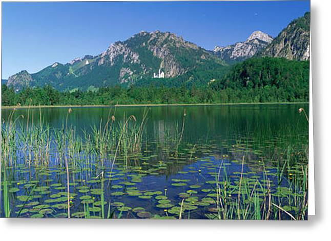 Lilypad Greeting Cards - Alpsee Bavaria Germany Greeting Card by Panoramic Images