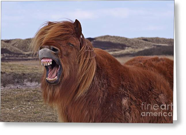 Grimace Greeting Cards - Already whinnied? Greeting Card by Angela Doelling AD DESIGN Photo and PhotoArt