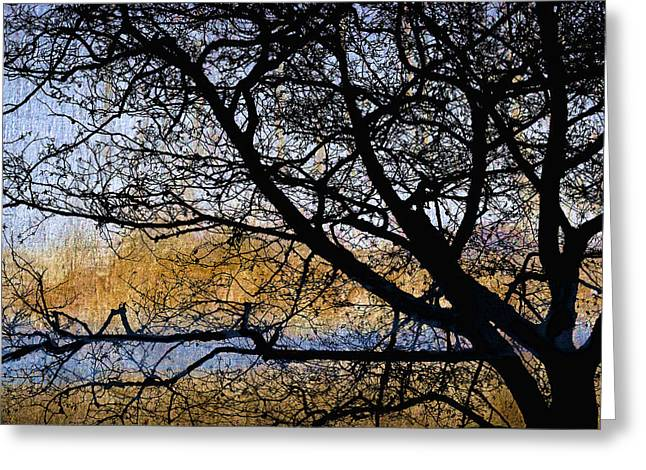 Golden Marsh Greeting Cards - Alsea Bay Tree Greeting Card by Carol Leigh