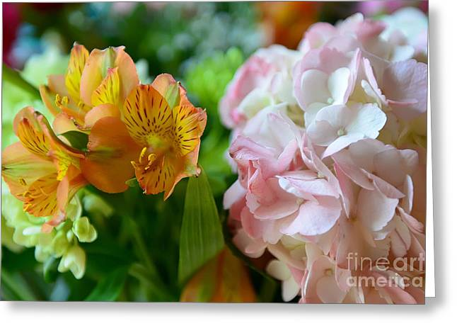 Lily Of The Incas Greeting Cards - Alstroemeria and Hydrangea Greeting Card by Olga Hamilton