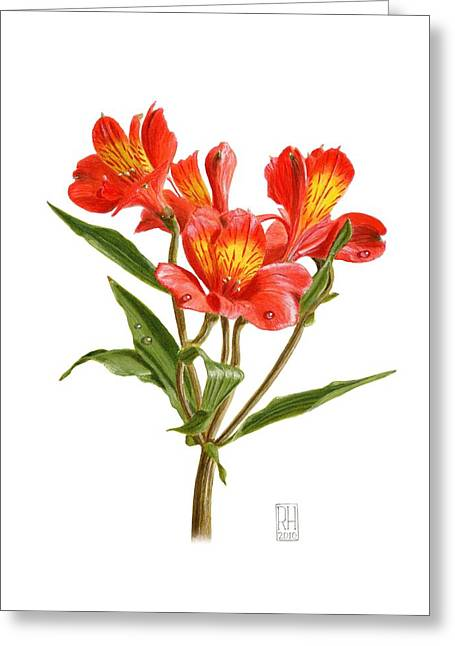 Alstroemeria Greeting Cards - Alstroemeria Greeting Card by Richard Harpum