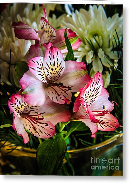 Lily Of The Incas Greeting Cards - Alstroemeria Greeting Card by Robert Bales