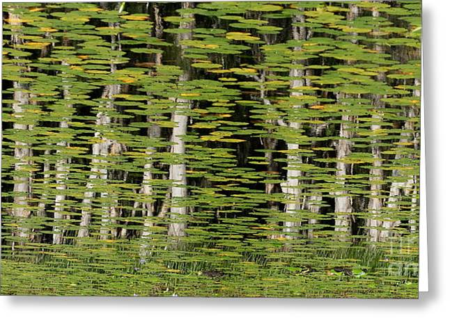 Altered Reflections Greeting Card by Howard Ferrier