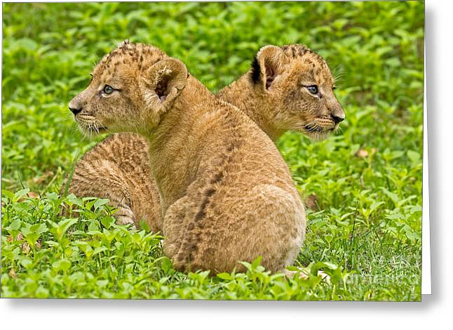 Alternative Interests Greeting Card by Ashley Vincent