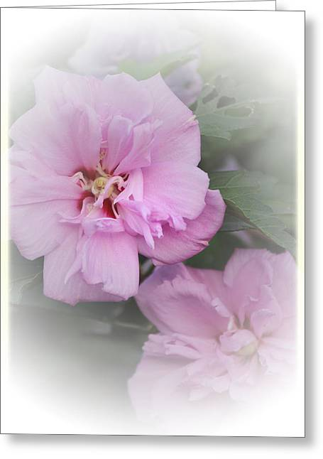 Althea Photographs Greeting Cards - Althea Greeting Card by Karen Beasley