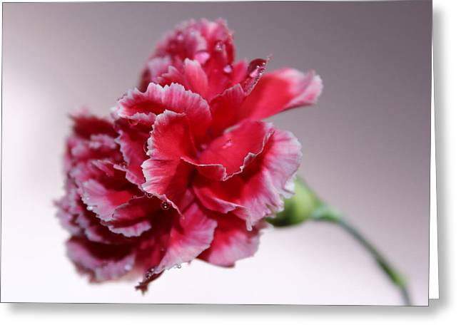 Pink Carnations Greeting Cards - Always Be With Me Greeting Card by Krissy Katsimbras