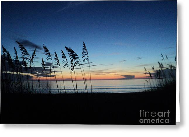 St. Lucie County Greeting Cards - Always in Season Greeting Card by Megan Dirsa-DuBois